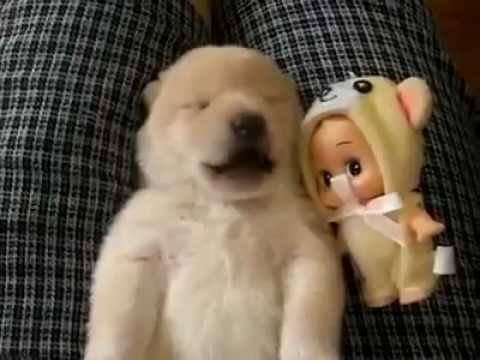 可愛的狗狗說夢話~超萌的!