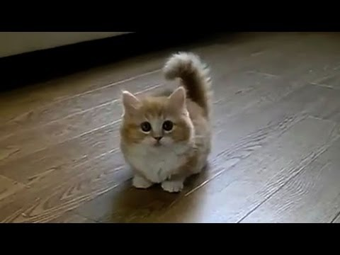 TOP 10 BEST CAT VIDEOS OF ALL TIME!