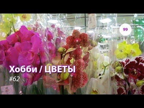 99#61 / Хобби-Цветы / 14.09.2018 - АШАН САД (ТК ТРОЙКА). ОРХИДЕИ + ВАЗЫ (видео)