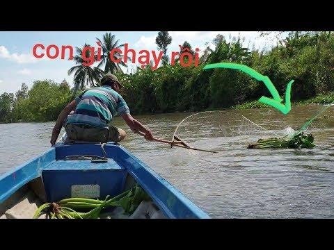 Khai trương vợt cá đầu năm. Tiếp tục hành trình săn bắt trên sông | Săn bắt SÓC TRĂNG | - Thời lượng: 32 phút.