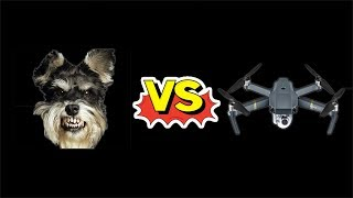 MAVIC PRO FAIL! DOG VS DRONE (DOG WINS)