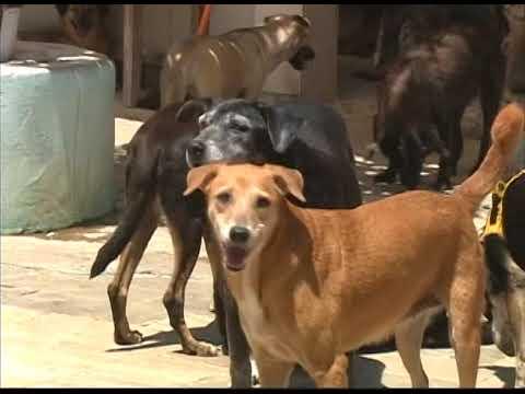 [JORNAL DA TRIBUNA] Abrigo de cães no bairro de Cadeias precisa de ajuda