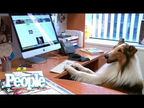 Lassie Is PEOPLE's Summer Intern -- And She Rocks It! | People