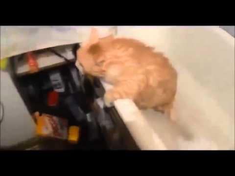Kelucuan kucing yg bikin ngakak