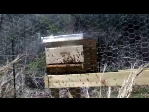 Metropolis Of Propolis Episode 6: Hives Under Attack!