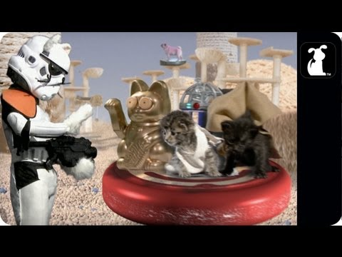 Parodia Star Wars con Gatitos