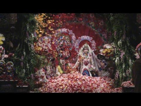 Video 2014 Radhastami - 3/3 - Festival of Flowers download in MP3, 3GP, MP4, WEBM, AVI, FLV January 2017