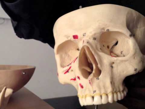 Cranial Nerves (4 of 12): Trochlear Nerve -- Head and Neck Anatomy 101
