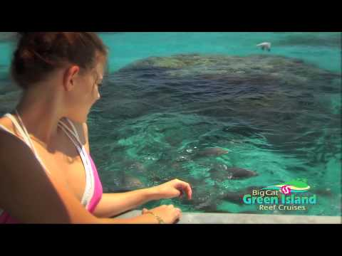 Glass Bottom Boat Tour at Green Island
