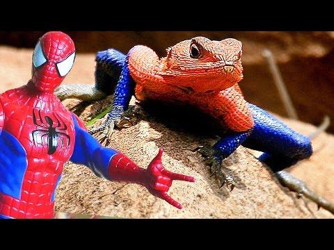 Amazing Lizard Spider-man !