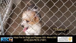 Fulton County Animal Shelter Adoptables