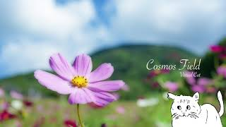 Download Lagu 【VCDR-0028】Virtual Cat / Cosmos Field Mp3