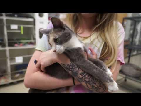 Video: WCJC Animal Shelter, October 5