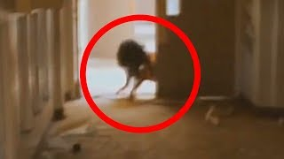 Video 5 Scariest Creatures Caught On Camera & Spotted In Real Life! MP3, 3GP, MP4, WEBM, AVI, FLV Oktober 2018