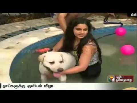 Summer-Bathing-festival-for-dogs-held-at-Delhi