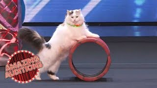 Video America's Got Talent 2018 -  Funniest / Weirdest / Worst Auditions - Part 1 MP3, 3GP, MP4, WEBM, AVI, FLV November 2018