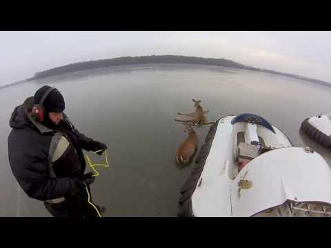 Hovercraft Deer Rescue
