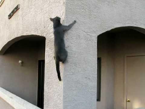 altro che spiderman, io sono spidercat