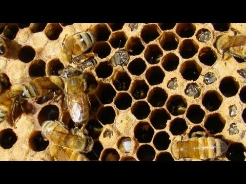 Earth Focus Episode 44 – Killing Bees: Are Government and Industry Responsible?
