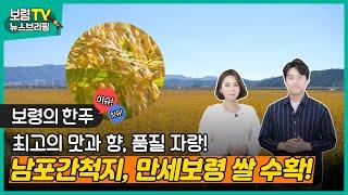 뉴스브리핑 | 최고의 맛과 향, 품질 자랑! 남포간척지, 만세보령 쌀 수확!