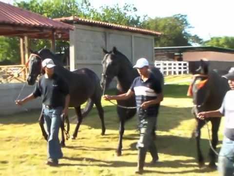 Hipico de Acoyapa 2011 Vicente Padilla, Roberto Clemente Jr MLB Purebred Andalusian Spanish Horses