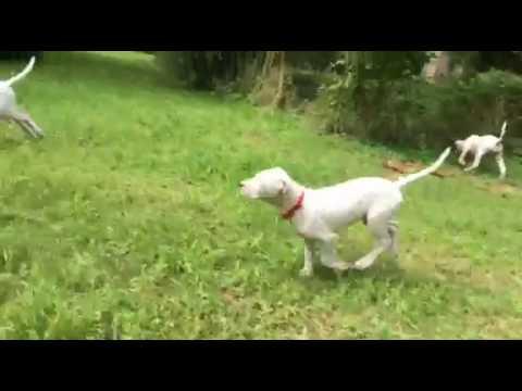 Alba de Caza Fiel running