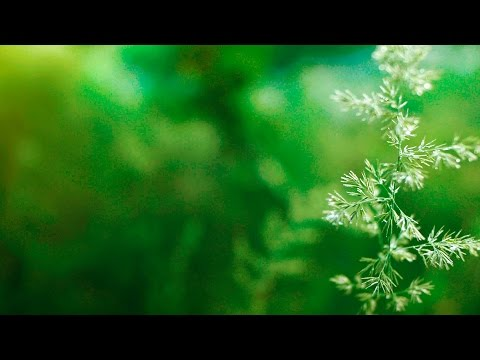Instrumental Background Music – relaxdaily B-Sides N°2 – for concentration, studying, relaxing