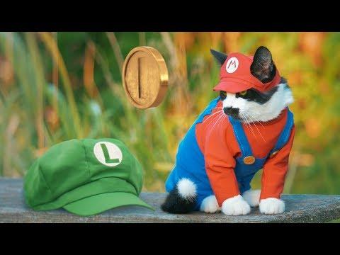 SUPER MARIO CAT BROS. (видео)