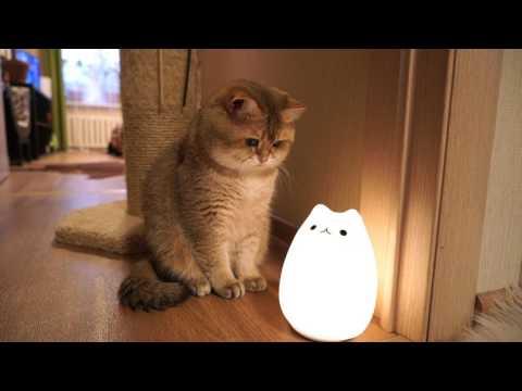 Kat en kattenlamp!