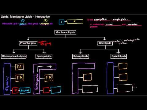 Lipids (Part 5 of 11) - Membrane Lipids - Intro