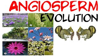 Angiosperm evolution