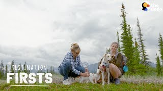 Rescue Dog Takes Her Cat Sibling on an Adventure l The Dodo Destination: Firsts by The Dodo