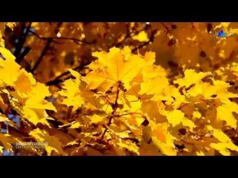 les feuilles mortes autumn leaves ernesto cortazar. Black Bedroom Furniture Sets. Home Design Ideas