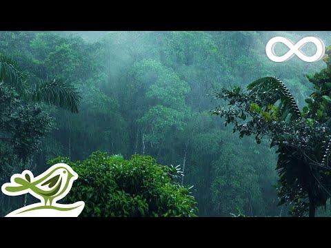 Relaxing Music & Soft Rain: Sl …