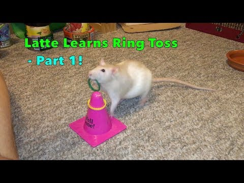 Latte Learns Ring Toss - Part 1!