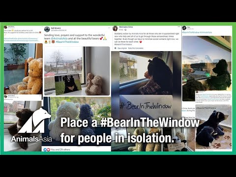 Place a #BearInTheWindow for all the people in isolation