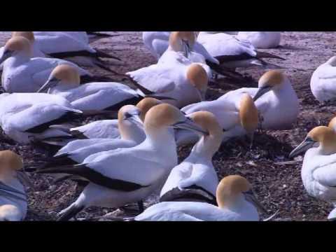 animals movie xxx