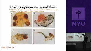 Natural Science II: Genomes And Diversity - Other Animal Genomes: Similarities And Differences
