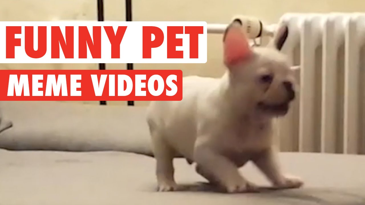 Funny Pet Meme Video Compilation 2016