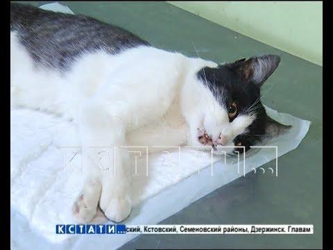 Нижегородская тварь, чтобы удивить девушку, решило убить кота