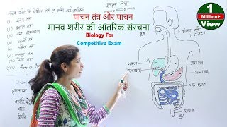 Biology For Competitive Exam - पाचन तंत्र और पाचन   मानव शरीर की आंतरिक संरचना   शरीर के तंत्र