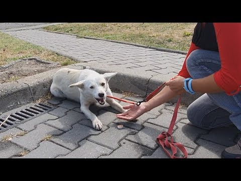 Homeless Dog Keeps Following People On The Street For A Heartbreaking Reason