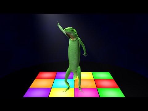 Video The Dance of Mr Lizard download in MP3, 3GP, MP4, WEBM, AVI, FLV January 2017