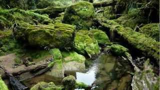 Punakaiki New Zealand  city photo : Bullock Creek, Paparoa National Park, Punakaiki, West Coast, New Zealand