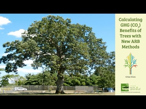 Tree Carbon Calculator