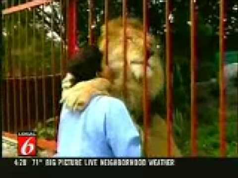 Löwe umarmt und küsst seine Wärterin