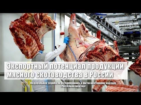 Экспортный потенциал продукции мясного скотоводства в России