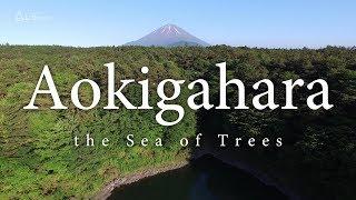 どこまでも続く樹海と子持ち富士