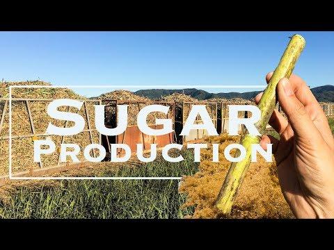 Sugar production Queensland - How Sugar Cane is converted into raw sugar