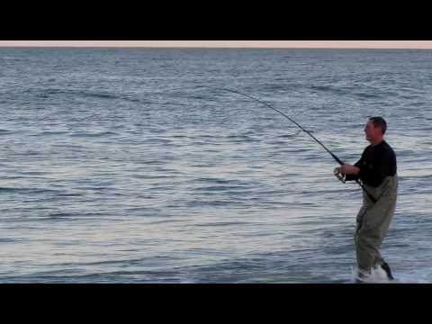 Bluefish Blitz at Island Beach State Park – Spring 2010